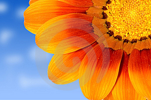 Stock Images - Daisy on sky