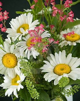 Stock Photography - Bouquet of daisies