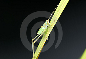 Stock Photography - Grasshopper