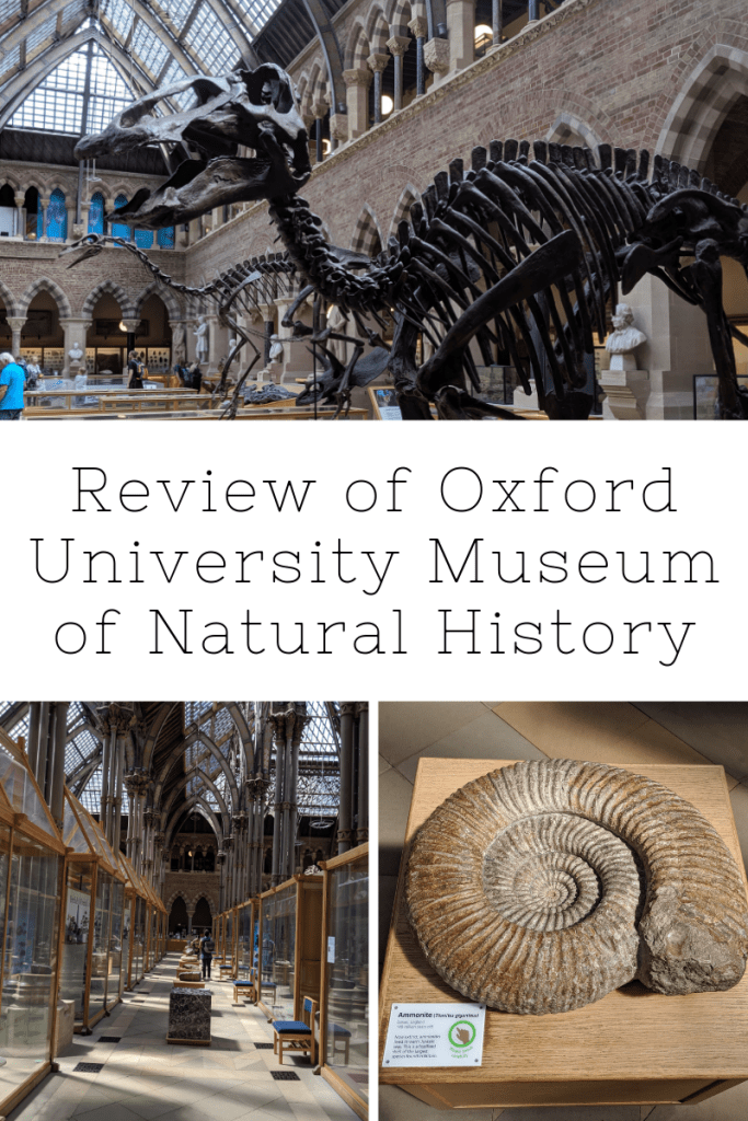 University of Oxford Natural History Museum Review | Oxford | Free Time with the Kids
