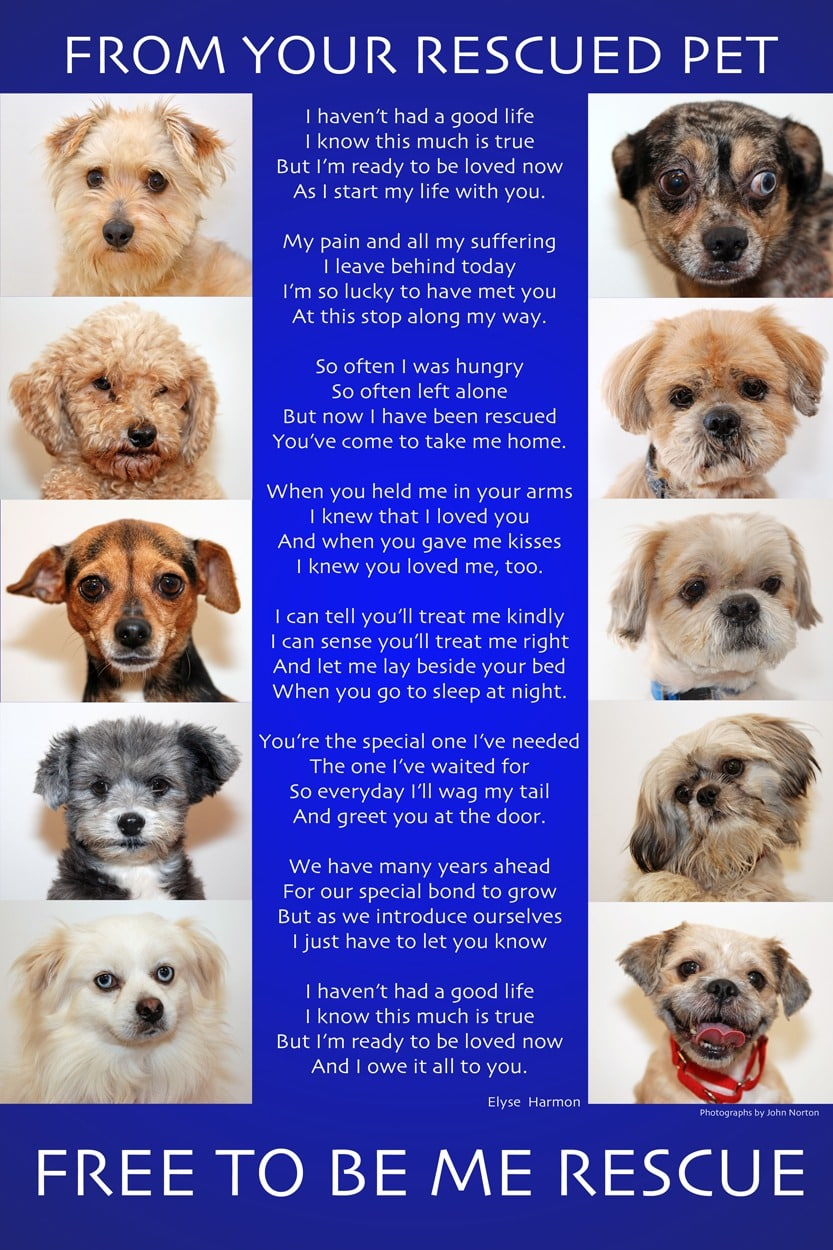 From Your Rescued Pet Poem