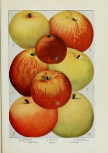 apple post pic 10