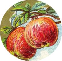 apple post pic 8
