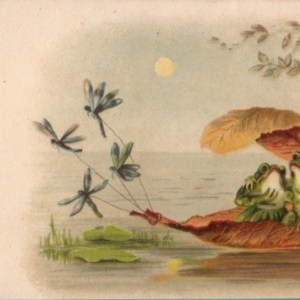 Frogs on their lily pad raft
