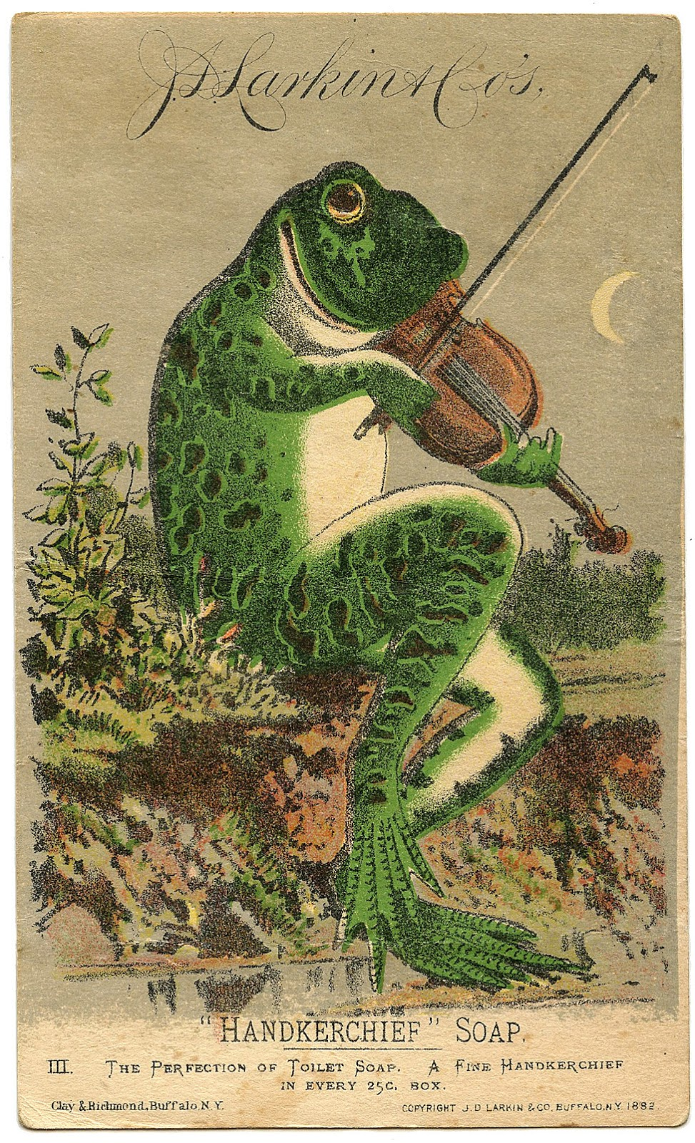 Vintage illustration of a frog playing the fiddle