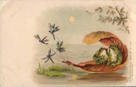 public domain frog illustration 6
