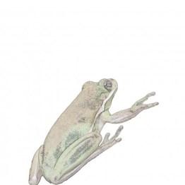 public domain frog illustration