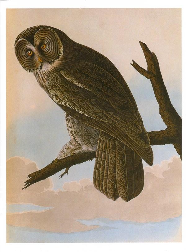 public domain vintage owl image 10