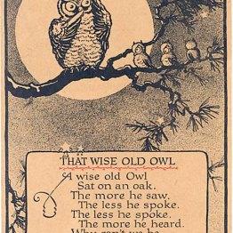 public domain vintage owl image 11