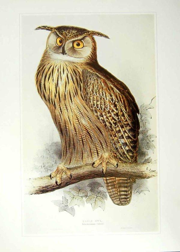 Vintage Owl Illustration