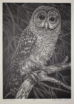 public domain vintage owl image 2