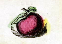 Public domain apple illustration vintage childrens books