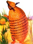 public domain vintage antique childrens book illustration of armadillo