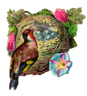 This is a copyright-free vintage illustration of a gorgeous bird with its nest and wildflowers