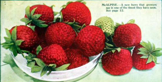Free antique illustration of fresh strawberries on a plate