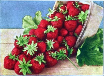 Free antique illustration of a vibrant basket of fresh strawberries