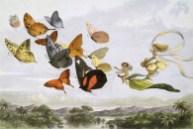 richard doyle in fairyland public domain