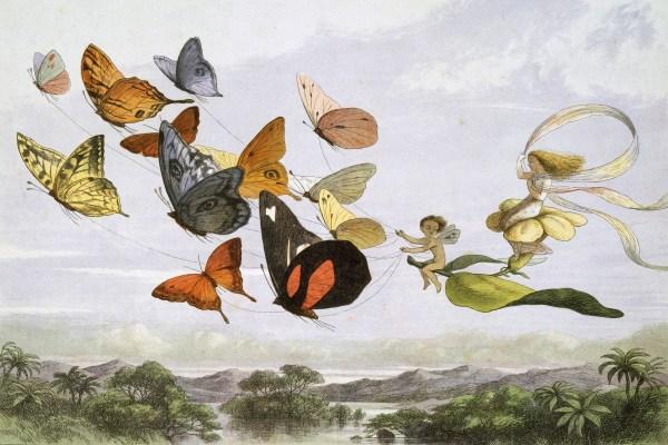 Fairies & Gnomes Free Vintage Illustrations