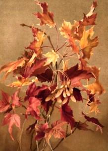 19th Century Fall Illustration of Autumn Leaves