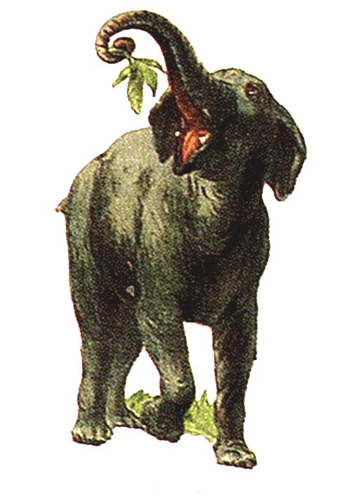 19th Century Illustrations of African Wildlife | Free ... Vintage Elephant Illustration