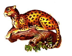 19th century vintage illustration of leopard - public domain