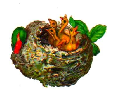 Vintage bird nest clipart with yellow baby birds