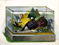 Antique aquarium illustrations from 19th century public domain