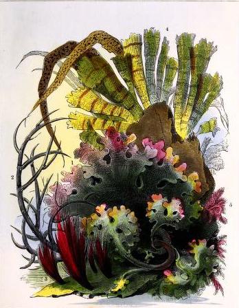 19th century aquatic aquarium illustrations from 1850