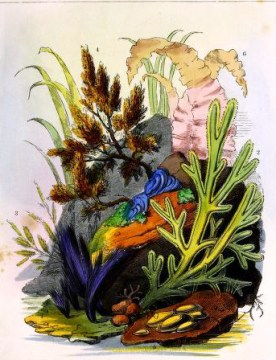 19th century aquatic garden aquarium illustrations