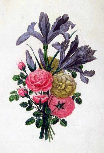 Copyright-free illustration of a French Rose bouquet