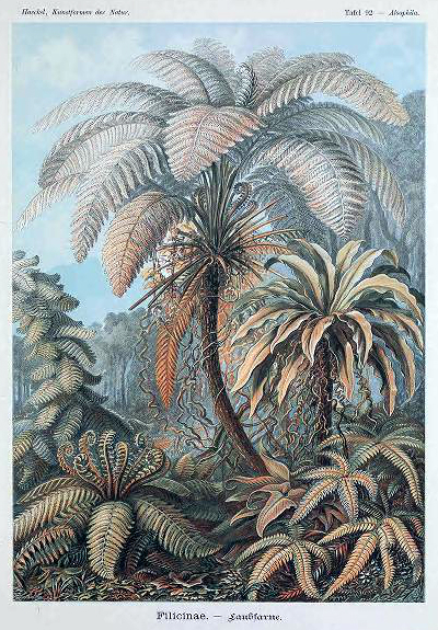 Free Ernst Haeckel Filicinae Fern illustration published in the late 19th-century. One of the most popular vintage scientific illustrations.