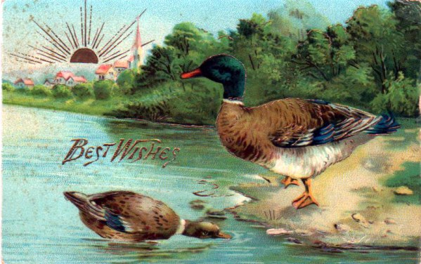 Copyright-free illustrations of ducks by a lake