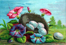 vintage nature illustrations colorful eggs