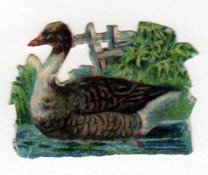 copyright-free illustrations of swimming duck
