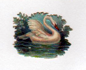 Copyright-free illustrations of swans