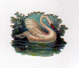 vintage nature illustrations swimming swan