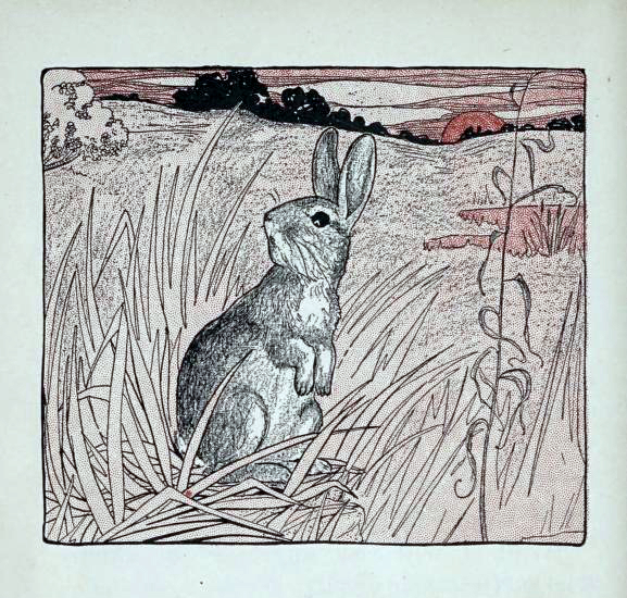 A free wild bunny illustration from a 1912 children's book. Now in the public domain.