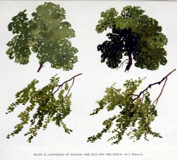 Free tree illustration of elm and beech trees