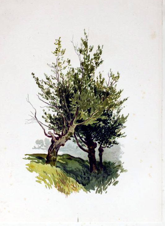 Free lush green tree illustration from the public domain