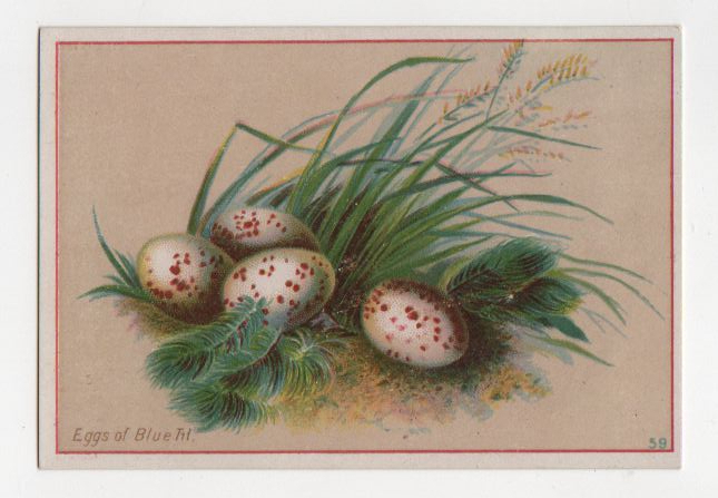 Vintage spotted eggs with grass illustration public domain