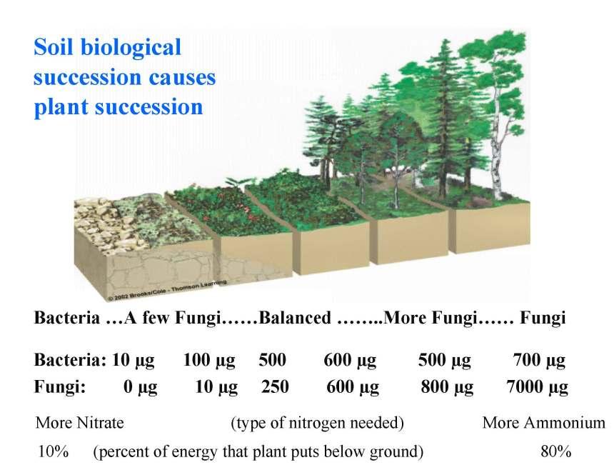 Soil succession