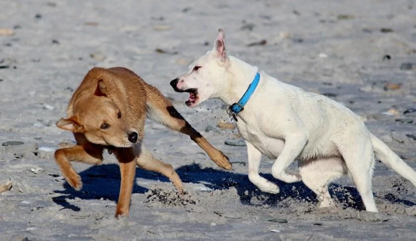 Dog bite in California