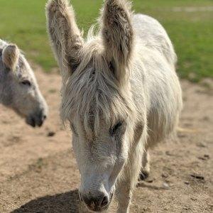 Isle of Wight Donkey Sanctuary