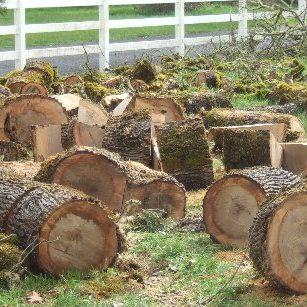 free firewood wood in