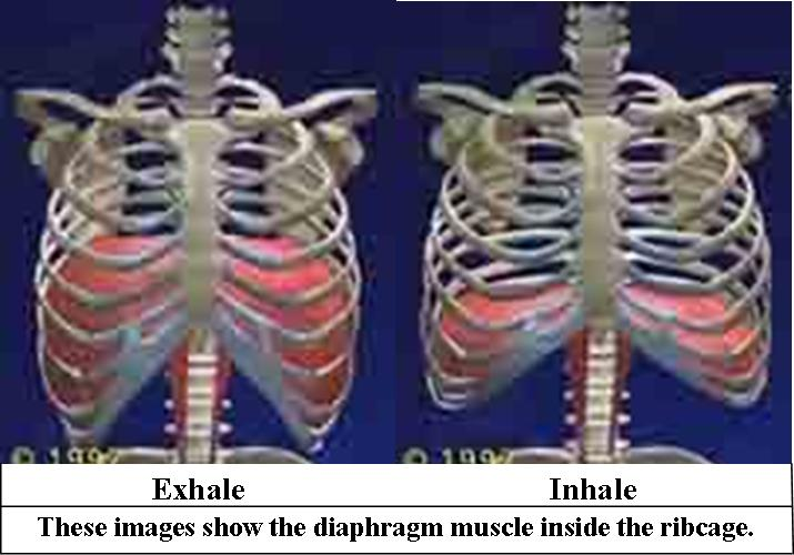 Inhalation And Exhalation Diagram Diagram Of Breathing Activity