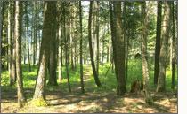 Door de bomen ziet u een bos