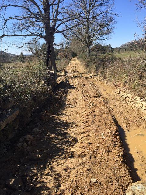 Limpeza e requalificação de caminhos rurais – Zava : Vale de Coelho
