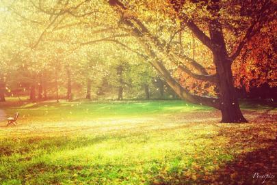 Dieses Bild ist in einem kleinen Park in Flöha aufgenommen worden und anschließend mit der App Filterstorm bearbeitet. Foto: Robert Poser