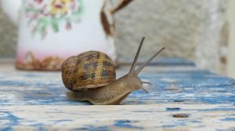 snail-959023_640