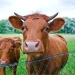 Rinderroulade und das Wirtschaftswachstum …